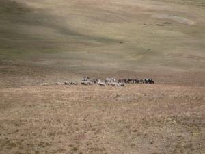 ayniglobal.org-ancestral-land-image-49
